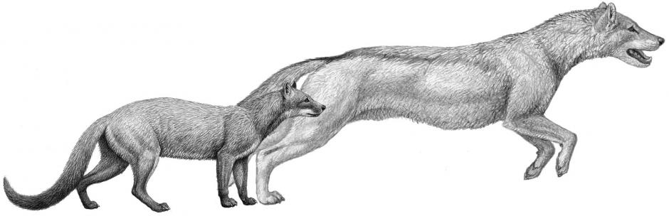 Climate Change Affected the Evolution of Dogs