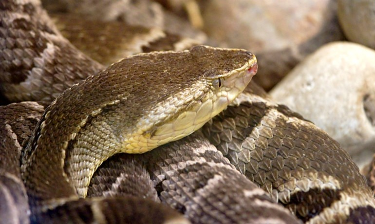 Something You Would Never Guess Can be done with Snake Venom