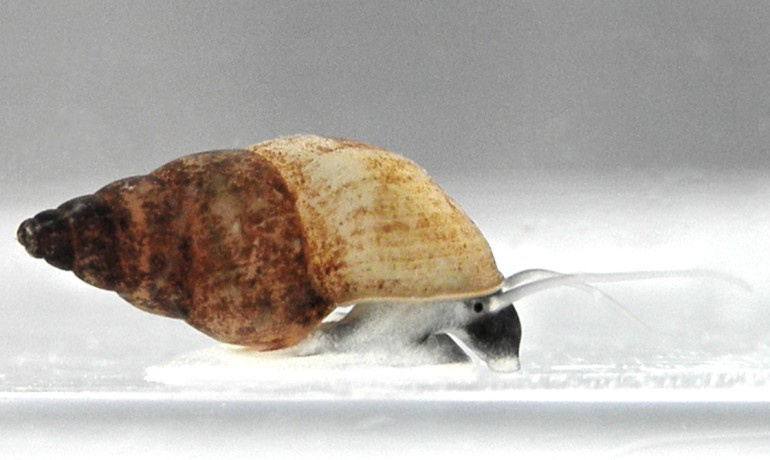 Biologists Say These Snails Make Sex Seem Pointless