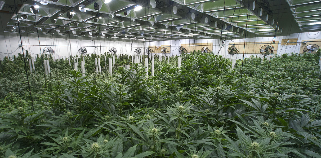 Curbing the marijuana industry's voracious energy appetite