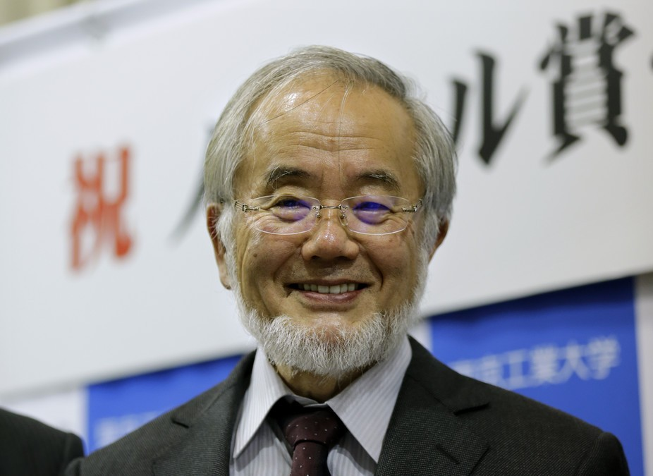 Yoshinori Ohsumi – a deserving winner of the Nobel Prize for physiology or medicine