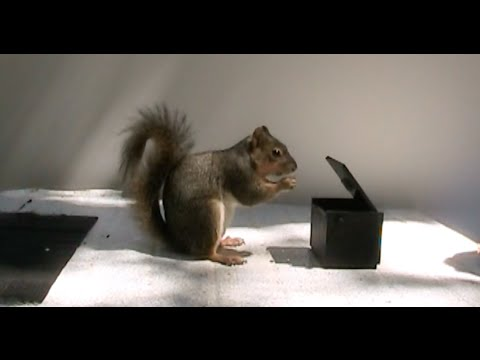 [Video] Watch this Angry Squirrel Go Nuts and Flick its Tail